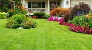 Beautiful-Yard