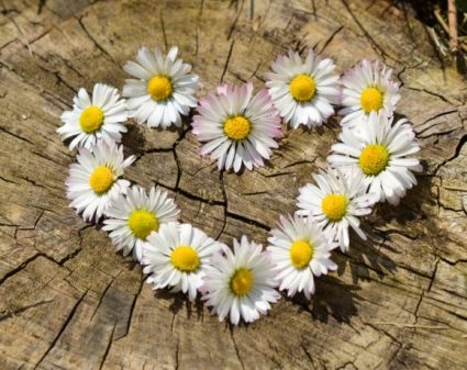 daisy-heart-flowers-flower-heart-580x460.jpg
